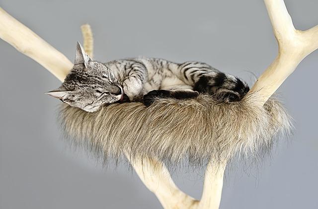 Des accessoires pour chat élégants