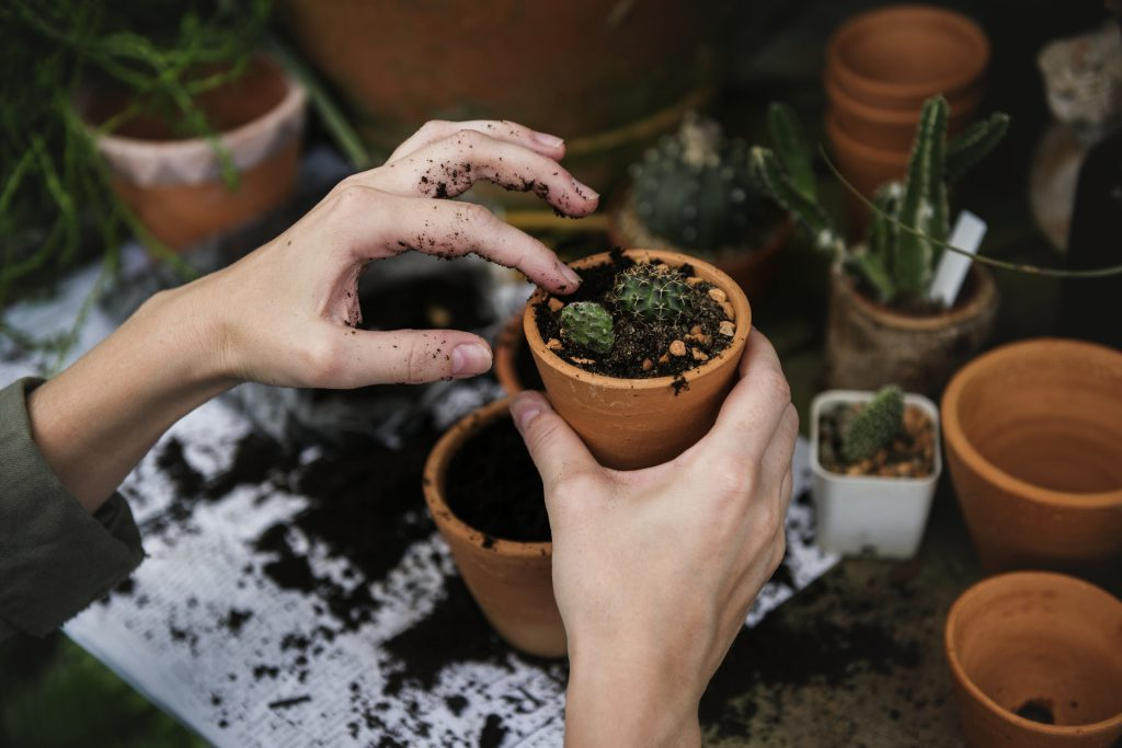 plantes grasses pour terrasse
